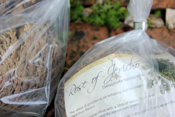 Closeup of rose of jericho packaging